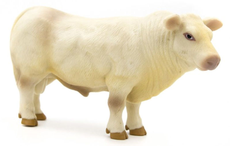 500251 - Little Buster Charolais Bull SUPER DURABLE construction Bring