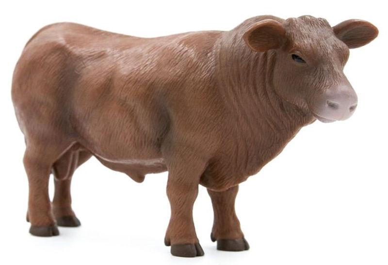 500254 - Little Buster Red Angus Bull SUPER DURABLE Bring your
