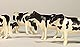 ERTL - 12662-25 - Cattle - Holsteins